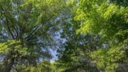 Q&A Tree