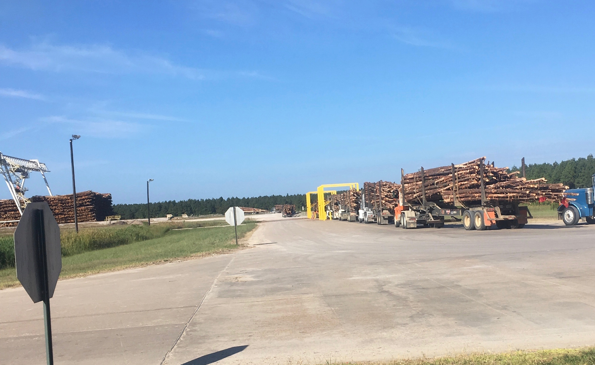 Long Line of Log Trucks