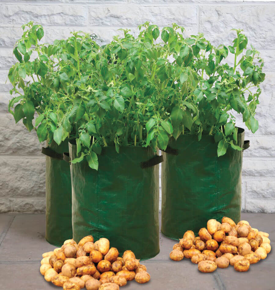 Image Potato Grow bags