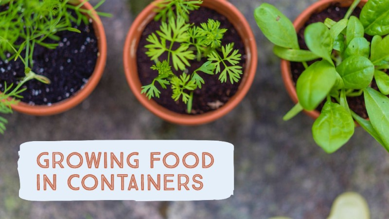 Image growing food in containers