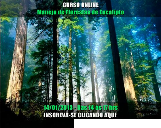 ÚLTIMA CHAMADA! Curso on-line para Criação Florestas de Eucalipto!
