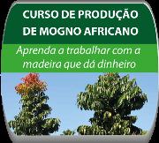 Curso de Produção de Mogno africano - Goiânia/GO.