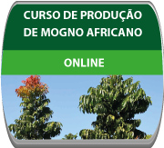 Curso de Produção e Mogno africano.
