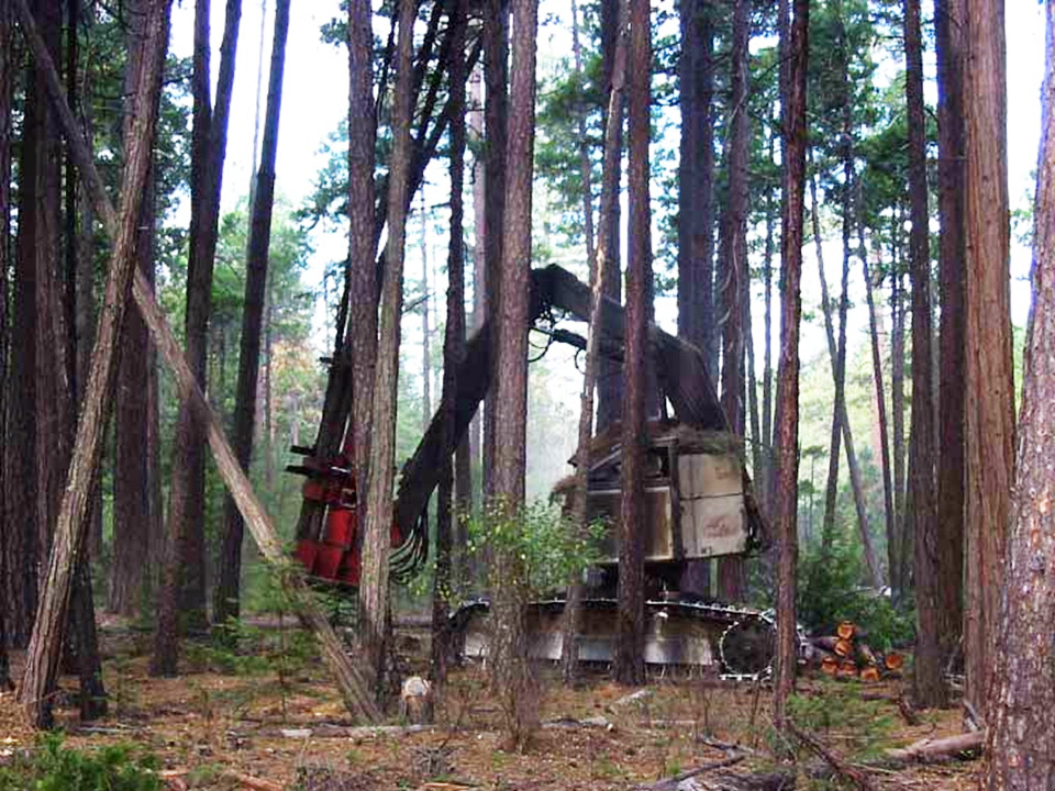 Forest thinning operation