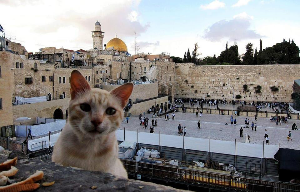 Adorable cat overlooking the Kotel