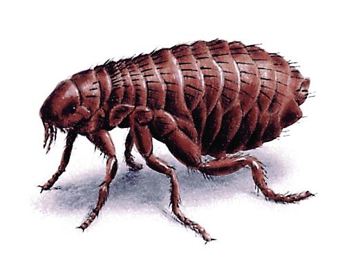f1b9a226 f03d 4903 ab4e 0bde6e98ee8e Fleas, fleas, fleas!