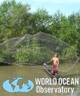 Photo credit: Mangrove Action Project | Marine Photobank