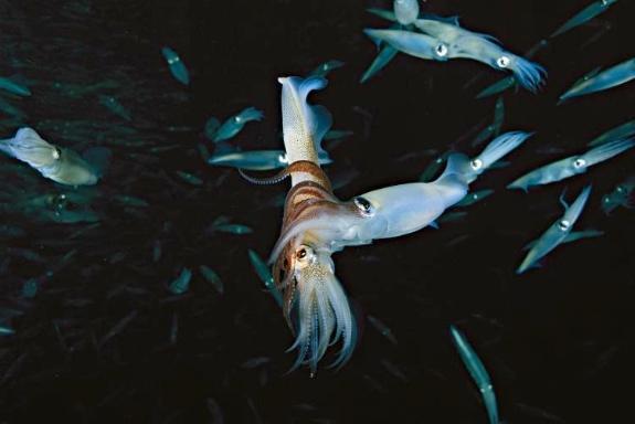Top Ocean Stories 2012