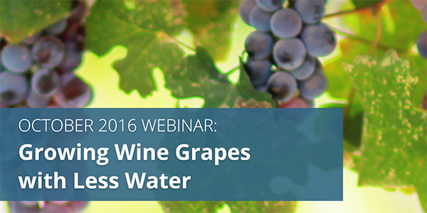 Webinar: Growing Wine Grapes with Less Water