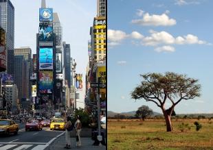New York & Africa