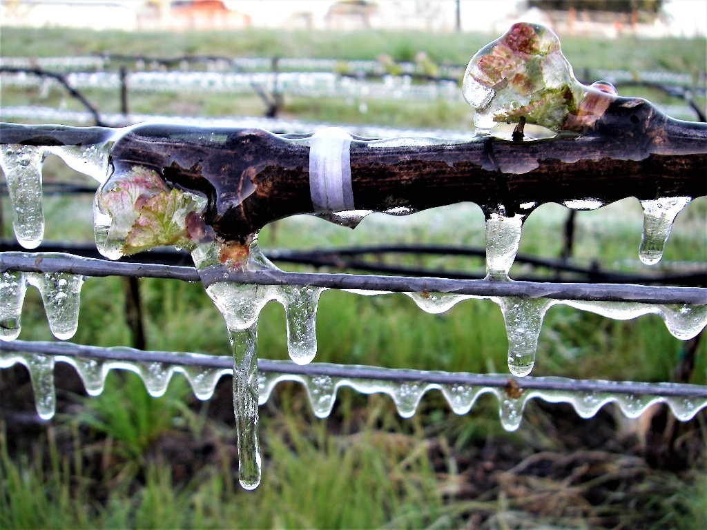 Frost protection using sprinklers