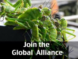 Join the Global Alliance for Rights of Nature