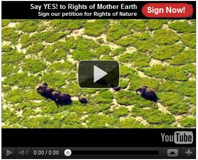 Sign our petition for Rights of Nature video