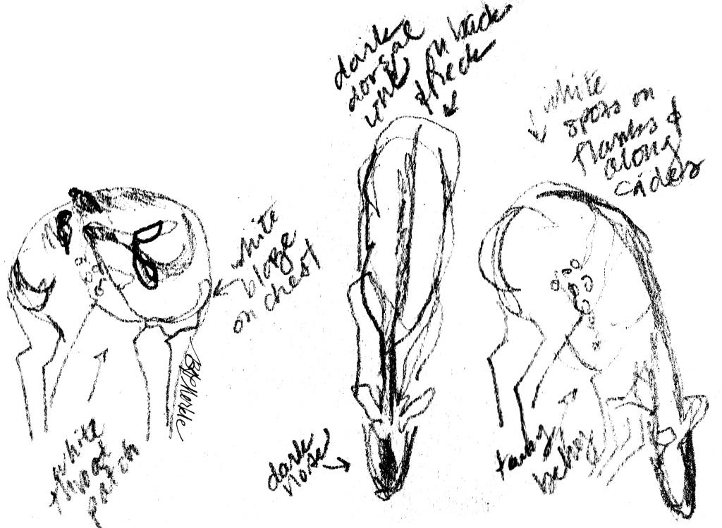 Illustration: student disecting a fish