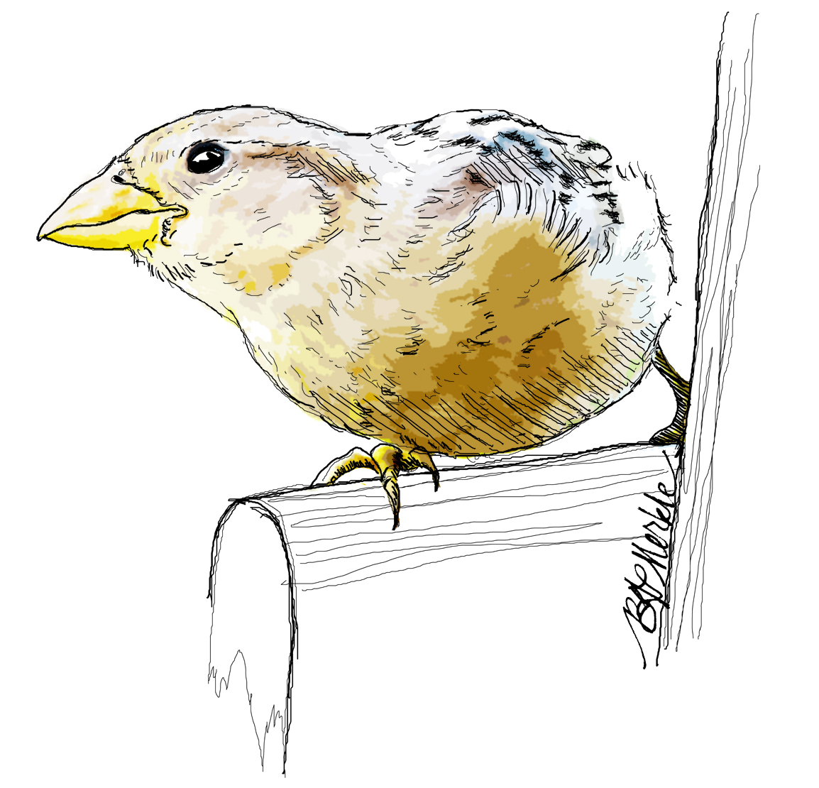 Finch on a perch_Illustration by Bethann Garramon Merkle, copyright 2015
