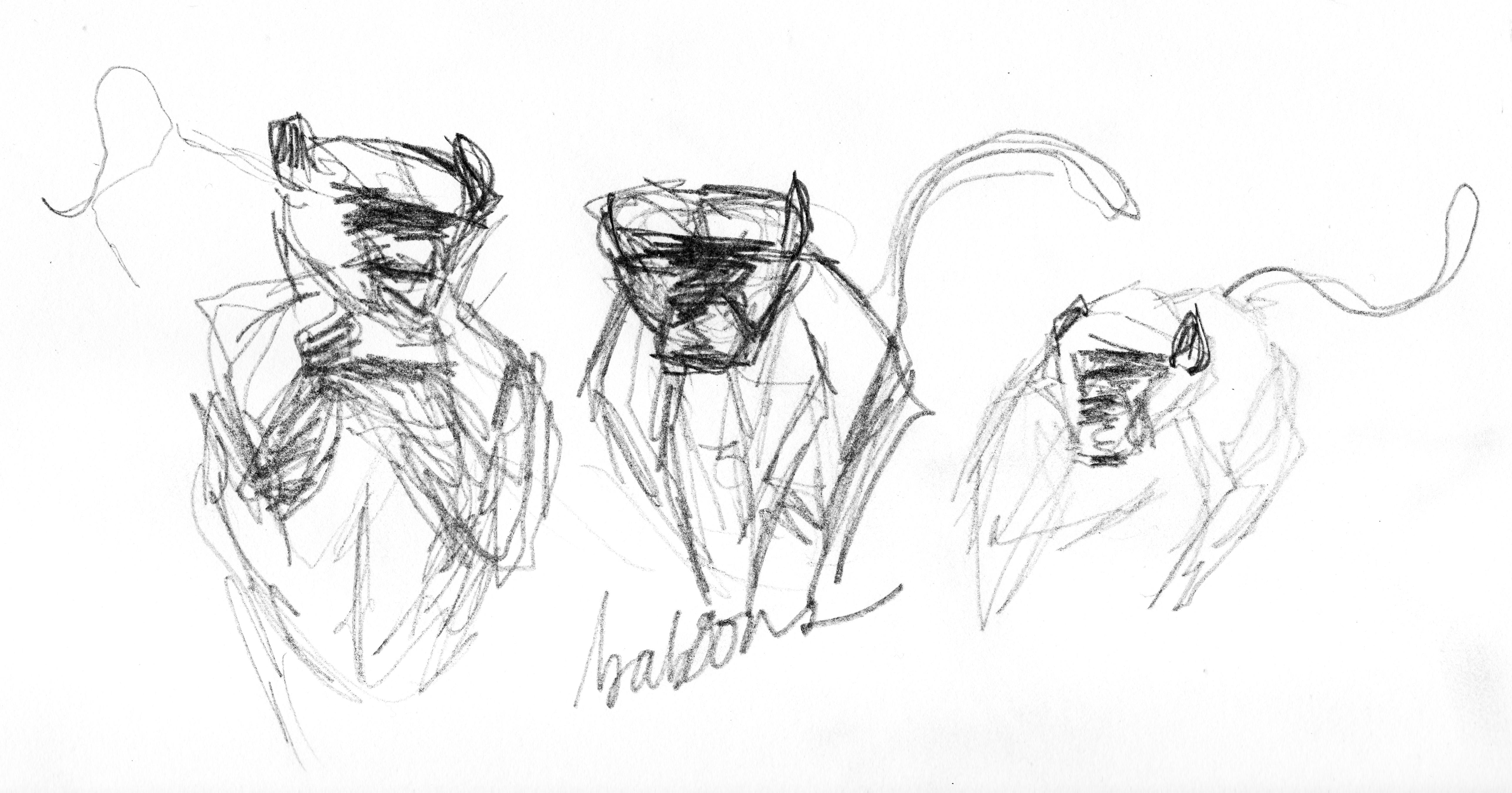 Illustration: field sketches of desert tortoises
