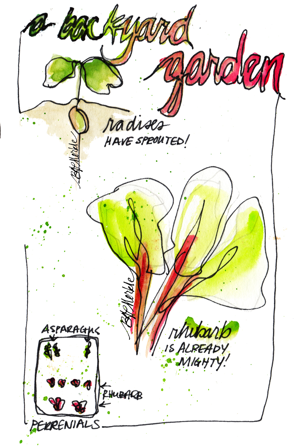 Sketch of plants in garden_Illustration by Bethann Garramon Merkle, copyright 2015