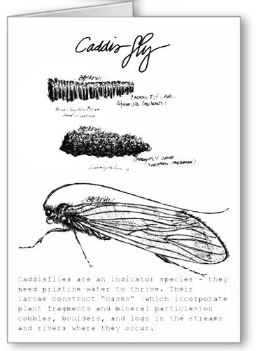 Caddisfly greeting card