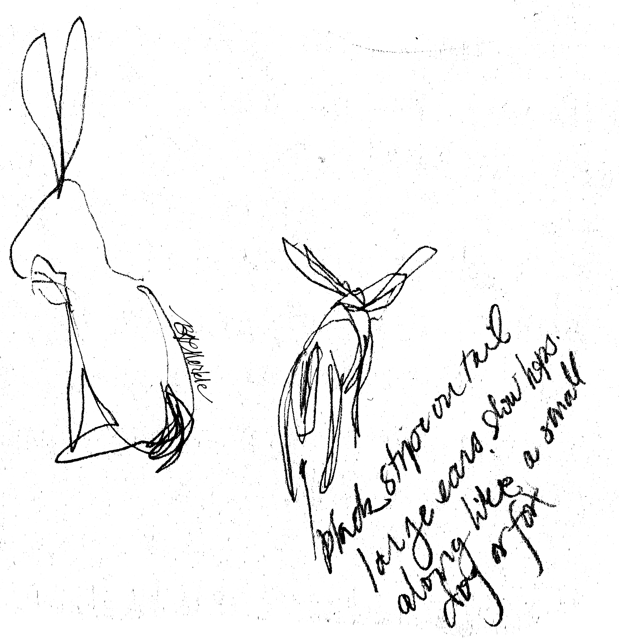 Illustration: hare sketches