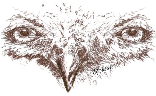 Illustration: snowy owl