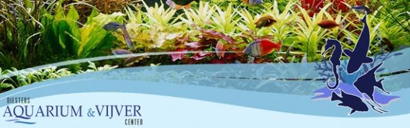 http://gallery.mailchimp.com/88f227339d7c9ff16585ca695/images/header_nieuwsbrief.2.1.jpg
