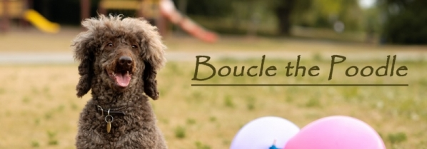 Boucle the Poodle - Blog
