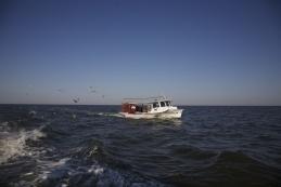 2012 Alabama Gulf Seafood Report Card