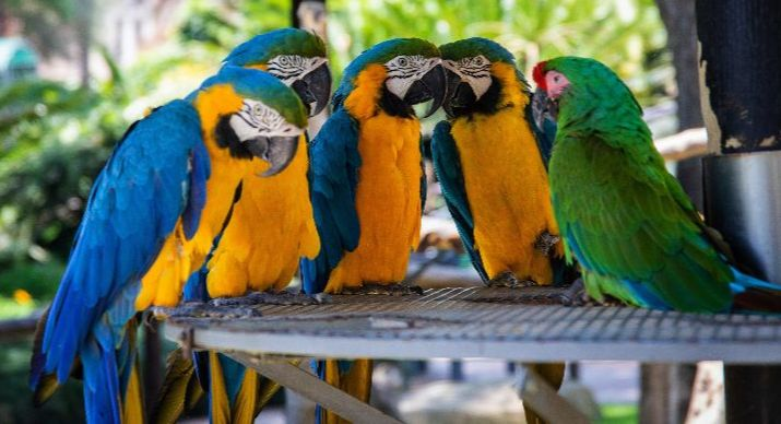 It looks like these five parrots are having a conversation, right?