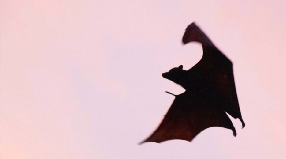 Silhouette of a bat in flight against a pink sky