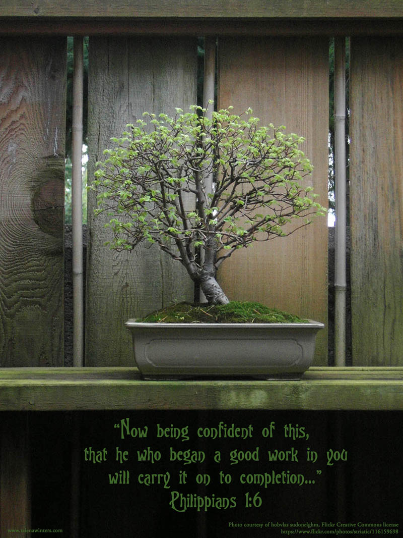 Bonsai Tree - The work isn't over