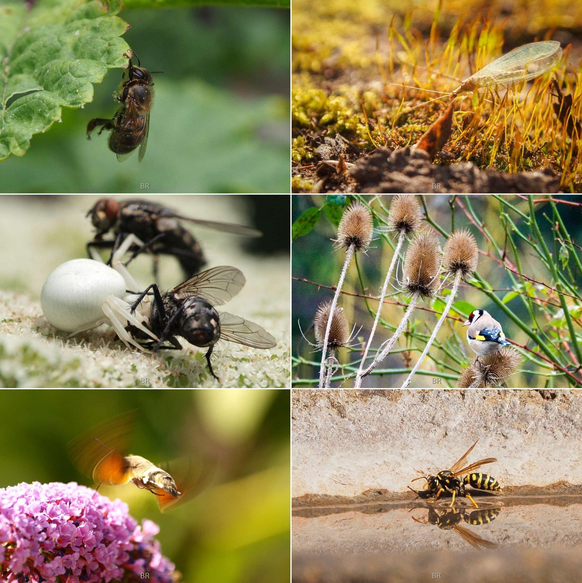 Tiere im Naturgarten