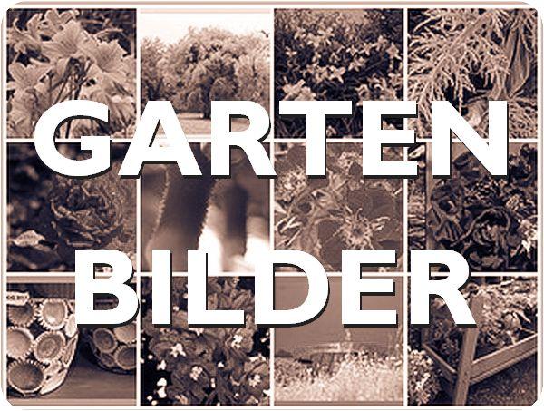 Link zu den K.i.Gartenbildern