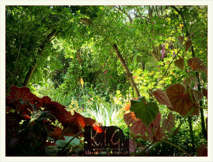 Unauffällig im Sommer, der Naturholzrosenbogen