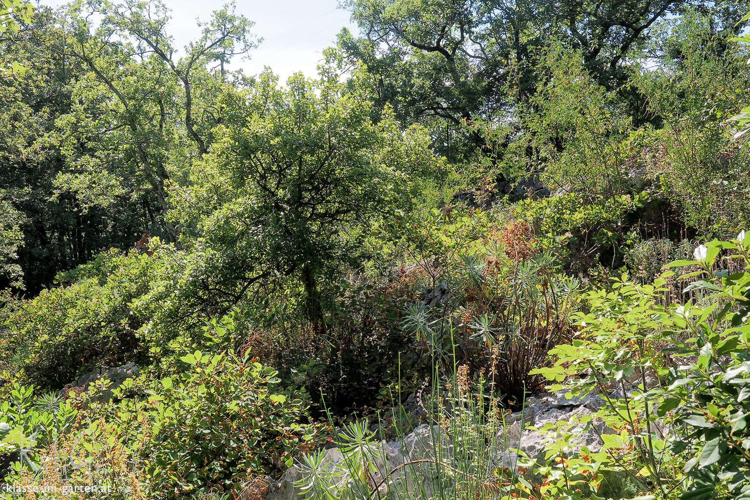 Giardino Botanico Carsiana- viel Blattduft in der südlichen Sonne