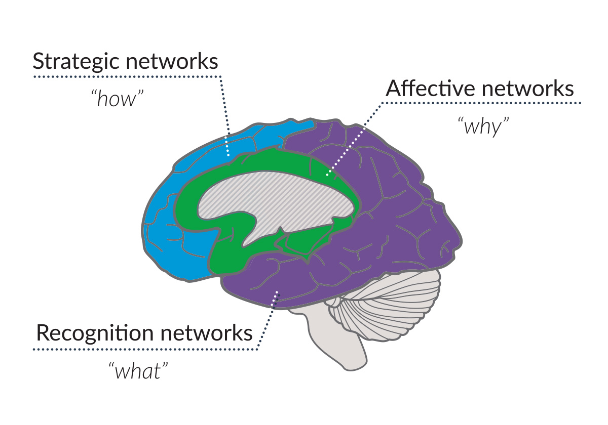 Illustration of a brain with callouts highlighting the three UDL brain networks