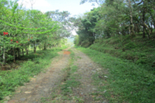 Road way leading up to the drilling site and the church