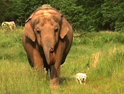 Elephant and Dog Photo