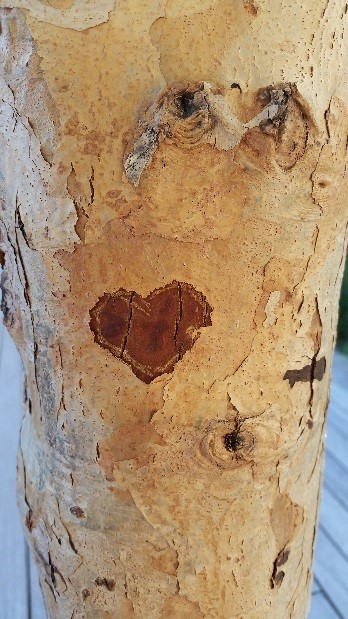 heart in tree bark
