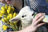 Læs om påsken på Domsognets hjemmeside