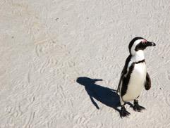 Pandas and Penguins