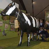 Blitzed Brits Studioarc Milking the Cow