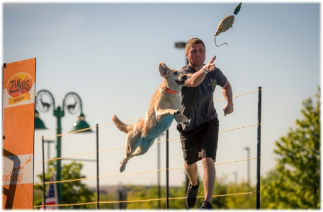 DockDogs in Hoffman Estates, IL