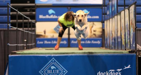 DockDogs Big Air Blue Buffalo