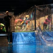 DockDogs Dueling Dogs Blue Buffalo