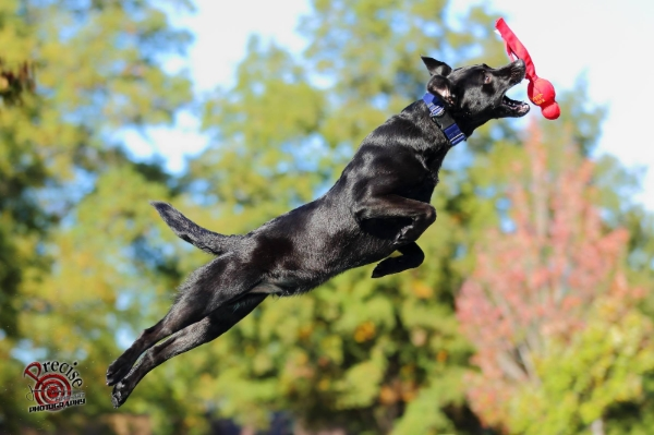 DockDogs at Franklin County Fair