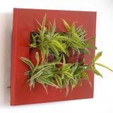 Quadres de plantes