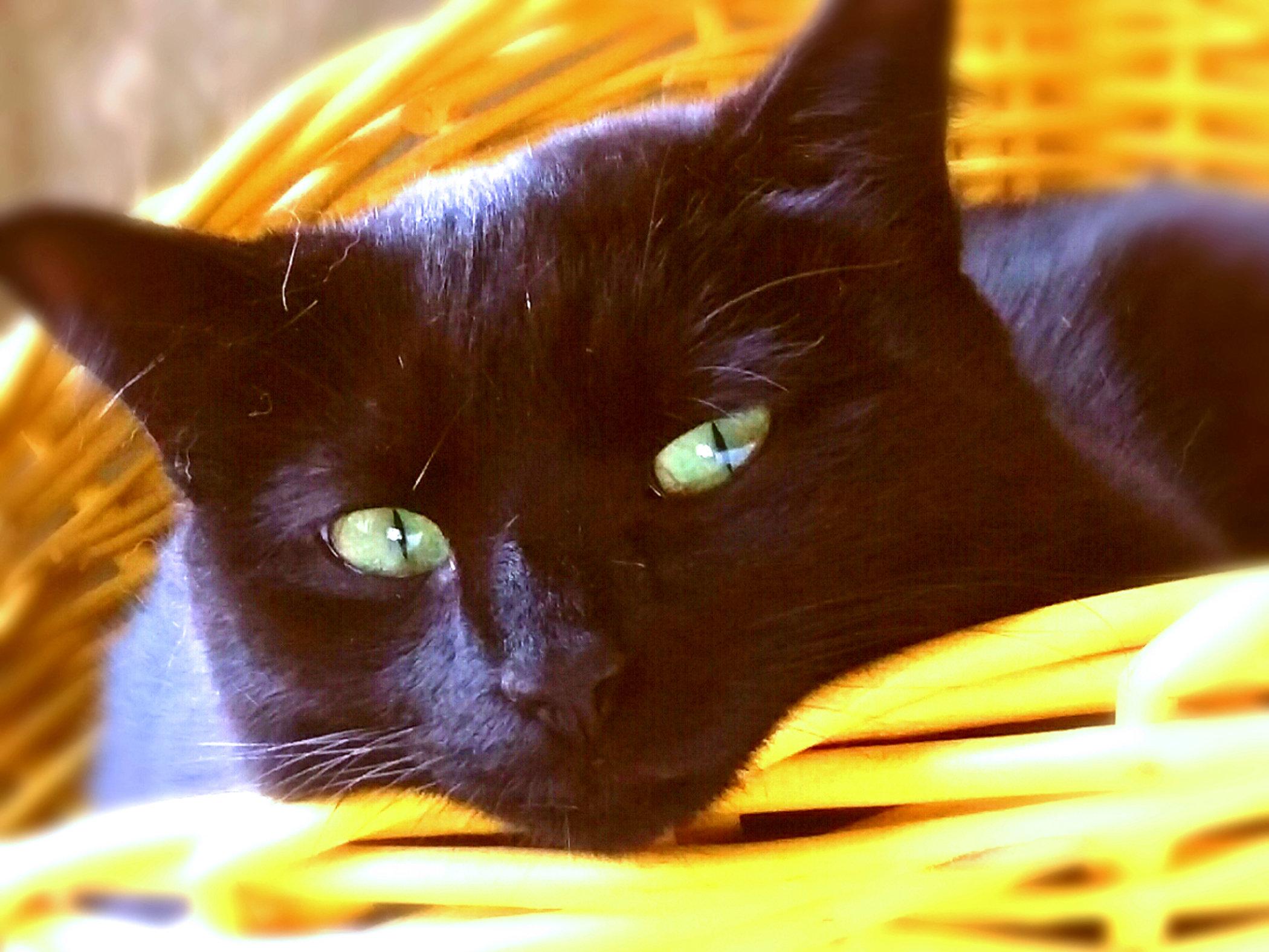 Bella's Basket of Dreams