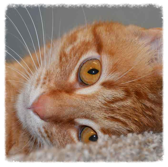 Help Spaymart with Kitty Suppl...