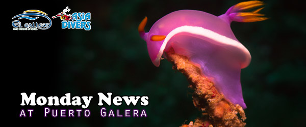 MondayNews at Puerto Galera