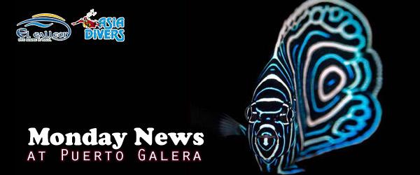 MondayNews at Puerto Galera